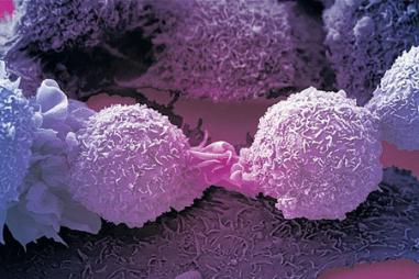 Biến tế bào ung thư thành tế bào thường