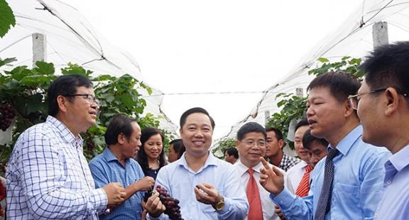 Trồng khảo nghiệm thành công nhiều giống cây mới tại Bắc Giang