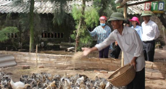 Thành công mô hình nuôi thử nghiệm 7.500 con vịt biển Đại Xuyên