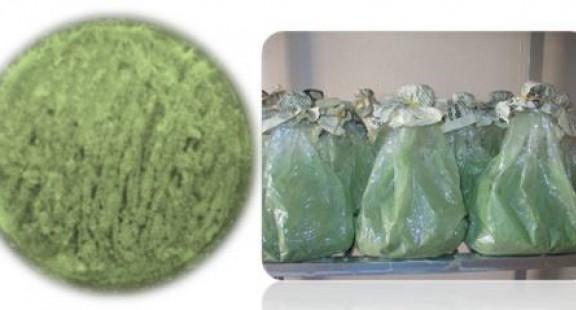 Trung tâm Ứng dụng Tiến bộ Khoa học và Công nghệ Sóc Trăng:  Chuyển giao quy trình phân lập và sản xuất nấm xanh