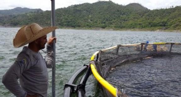 """Chứng nhận """"Không kháng sinh"""" đối với thủy sản có khả năng sớm được áp dụng"""