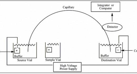 Phương pháp điện di mao quản sử dụng Detector độ dẫn không tiếp xúc  và ứng dụng trong phân tích thực phẩm
