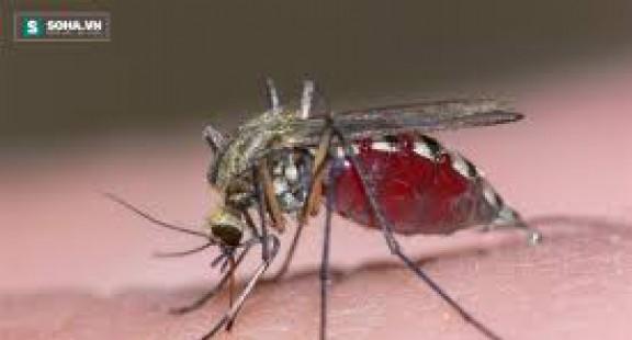 Insulin có thể làm tăng khả năng miễn dịch của muỗi đối với vi rút West Nile
