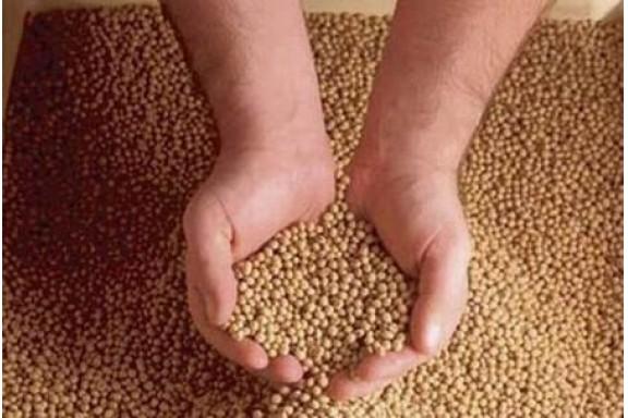 """Các đơn vị sản xuất thức ăn chăn nuôi """"tiếng tăm"""" có đang vi phạm tiêu chuẩn chất lượng?"""