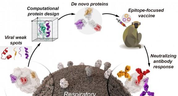 Thiết kế vaccine từ protein nhân tạo