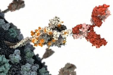 Cuộc đua tìm kháng thể ngăn chặn COVID-19