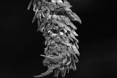 Xịt chống muỗi từ đá trân châu perlite