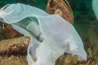 Các nhà khoa học thử nghiệm nhựa chìm sâu dưới nước hơn 20 năm, với kết quả đáng buồn