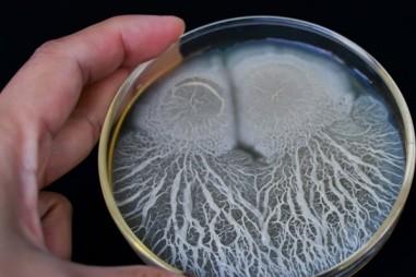 Các nhà nghiên cứu sử dụng bào tử vi khuẩn mã hóa DNA để cải thiện khả năng truy xuất nguồn gốc thực phẩm
