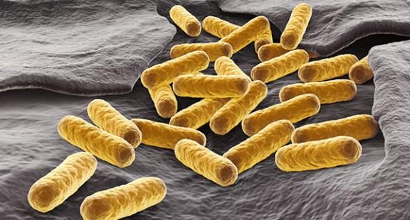 Chiến đấu với E.coli bằng E.coli