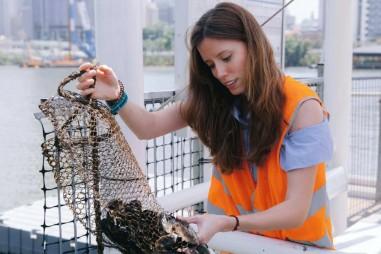 Phát hiện nhựa trong tất cả các mẫu hải sản