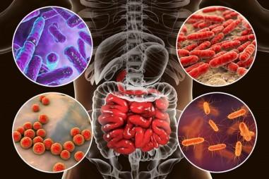 Vai trò của hệ vi sinh vật trong trị liệu ung thư
