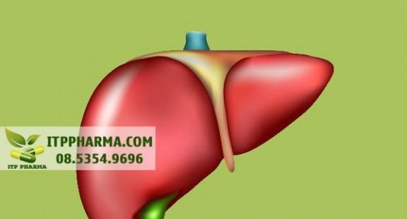 Biệt hóa tế bào chức năng gan từ tế bào gốc người và chuột