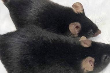 Đưa chuột biến đổi gien vào không gian, một tháng sau nhận kết quả bất ngờ