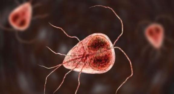 Các nhà khoa học luôn nắm bắt được các đợt bùng phát bệnh truyền nhiễm ra sao?