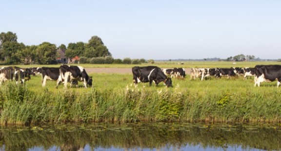 Nghiên cứu đánh giá cách giảm tình trạng kháng kháng sinh ở vật nuôi
