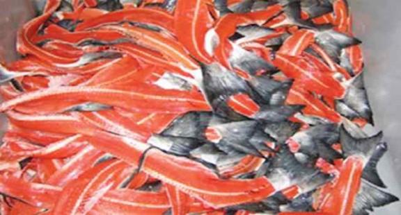 Nghiên cứu thu nhận PEPTIT mạch ngắn có hoạt tính chống oxy hóa từ phụ nhẩm cá hồi (Salmo salar)