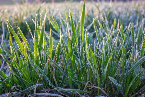 Công cụ Terahertz phát hiện thiệt hại do sương giá trên cây trồng