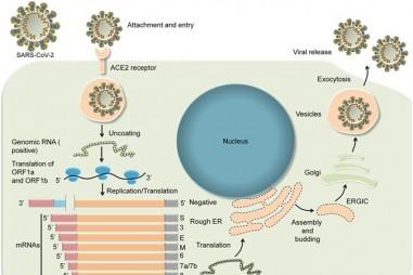 Dò theo virus SARS-CoV-2 với trình tự hệ gene