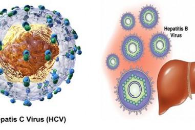 Nghiên cứu viêm gan C: Những người hùng thầm lặng