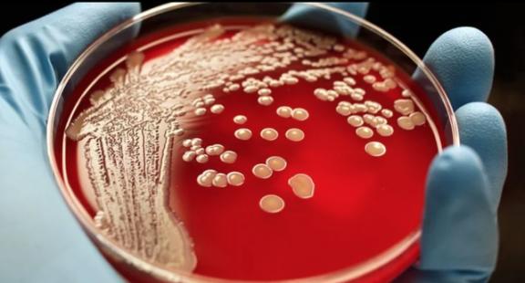 Phát hiện 12.000 loài vi khuẩn mới