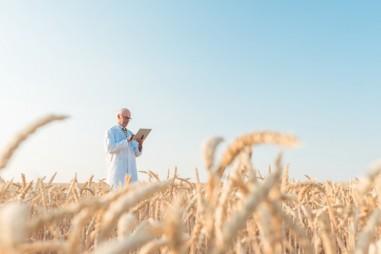 Phát hiện bộ gien lúa mì tiêu biểu có thể củng cố an ninh lương thực toàn cầu