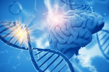 Những vùng gene góp phần vào sự phát triển nhận thức
