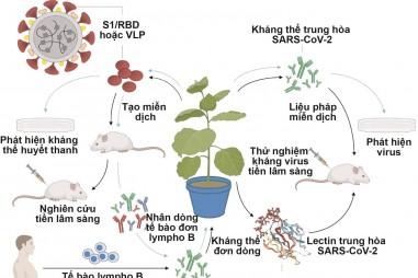 Công nghệ sinh học thực vật và tiềm năng trong đối phó với SARS-CoV-2