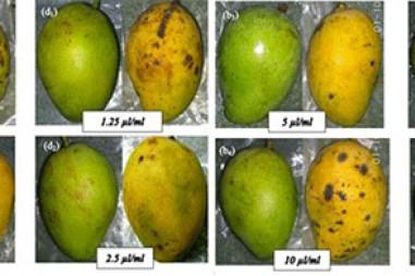 Bảo quản thực phẩm bằng màng sinh học kết hợp tinh dầu thực vật