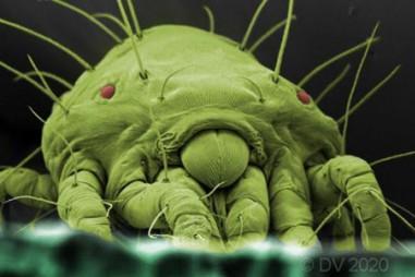 Các nhà nghiên cứu khám phá cách thức thuốc trừ sâu sinh học chống nhện ve