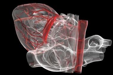 Các van tim do phòng thử nghiệm tạo ra có thể phát triển trong cơ thể người nhận