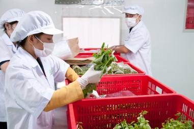 Đẩy mạnh đầu tư nhằm nâng cao năng lực chế biến rau quả