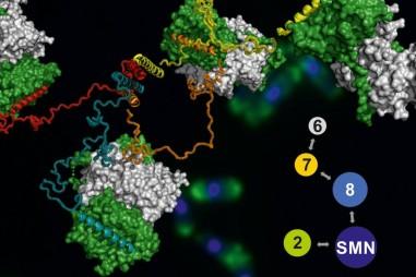 Hình ảnh 3D đầu tiên của một phân tử khổng lồ
