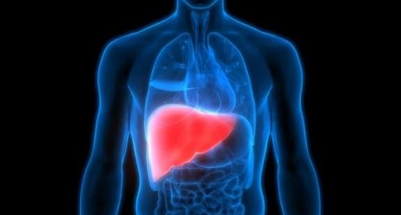 Phương pháp mới tái tạo và chế tạo thành công gan ghép tạng cho người