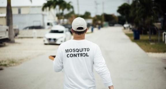 Mỹ lần đầu thả muỗi biến đổi gen