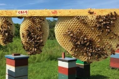 Cấu trúc lỗ tổ ong mật