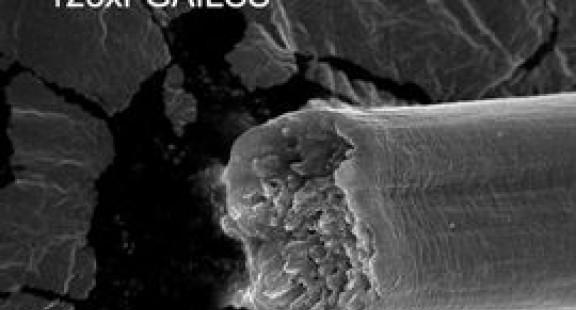 Sợi được tạo ra từ vi khuẩn: Mạnh hơn thép, dai hơn sợi kevlar