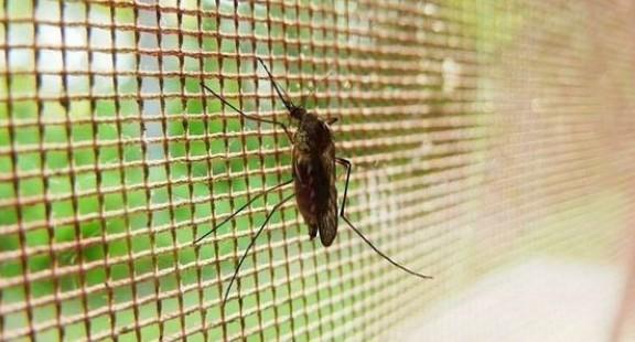 Nghiên cứu hợp chất chống sốt rét liều đơn