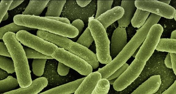 Chất ức chế ACE làm giảm phản ứng miễn dịch đối với các bệnh nhiễm trùng do vi khuẩn