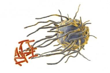 Nhịp sinh học có thể được dùng để kiểm soát các tế bào hệ miễn dịch