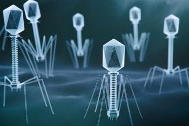 """Các nhà khoa học nhắm đến khai thác """"Tên lửa Tự tìm hướng"""" vi khuẩn khó tin"""