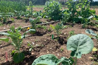 Phát hiện tiềm năng chỉnh sửa gen trong cây trồng