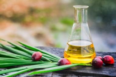 Dầu cọ – một trường hợp dầu ăn về giám sát chất lượng, an toàn và quy trình