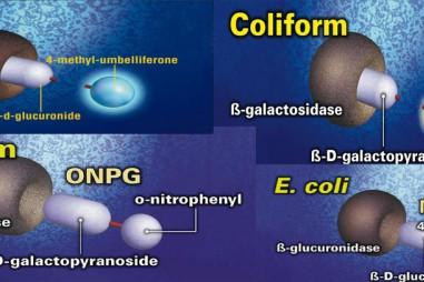 Phát hiện E.Coli và coliforms bằng công nghệ cơ chất đặc hiệu
