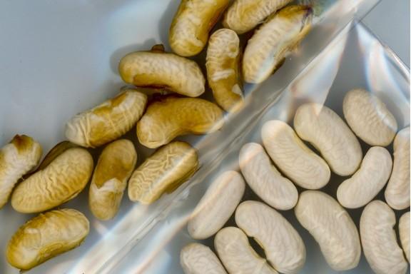 Lớp phủ giúp hạt giống chịu hạn