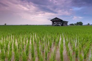 Cây trồng biến đổi gene tăng trưởng nhanh hơn 50%