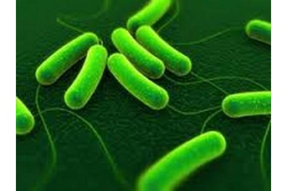Giải mã bí mật vi khuẩn đường ruột của những người thọ 100 tuổi