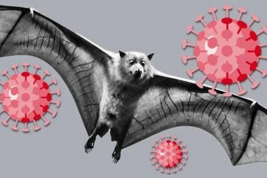 Vì sao dơi có khả năng chống lại virus corona